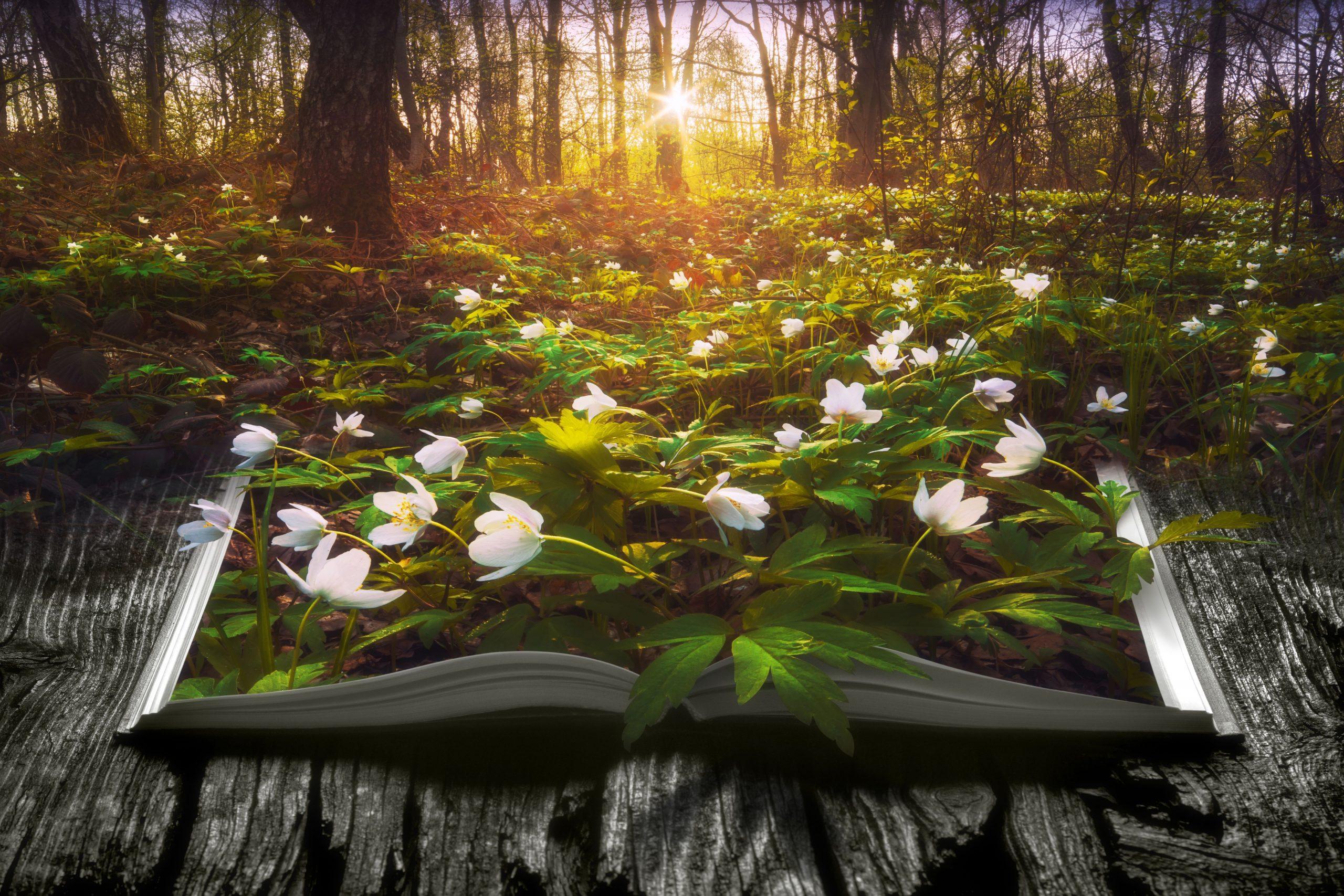 livre ouvert fleurs (2)